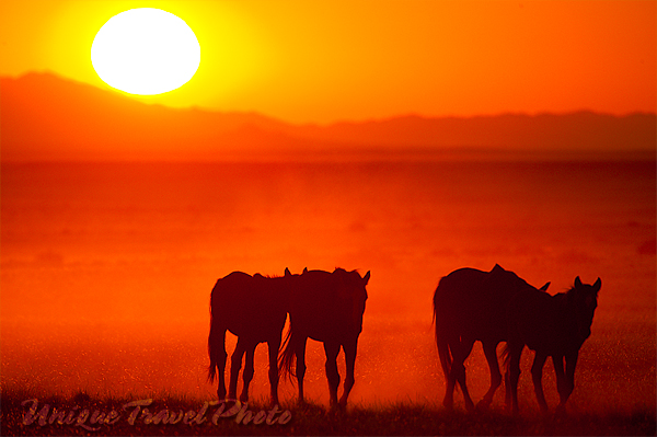 Small Herd Wild Horses Namibia Africa