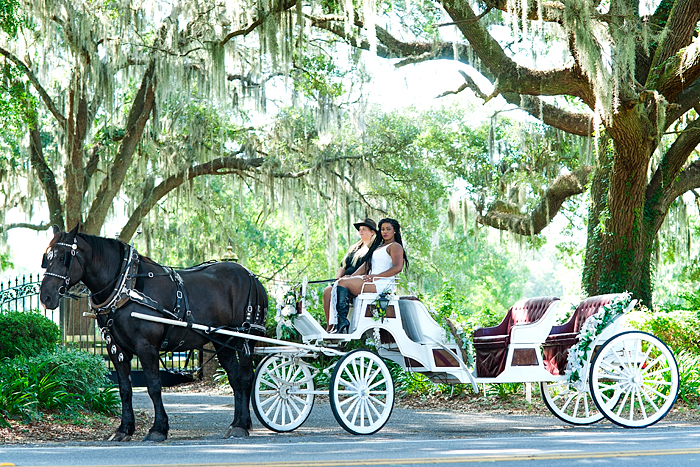 Horse drawn carriage tour of horse farms, Ocala, Florida